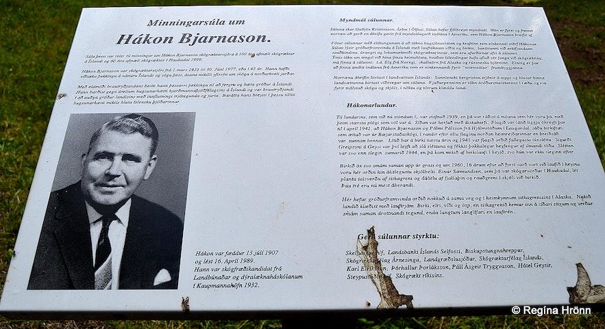 Haukadalsskógur forest South-Iceland
