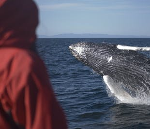 Reykjavik Whale Watching | Tour to Faxafloi Bay