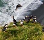 Between May and late August, Iceland is home to a huge population of Atlantic puffins.