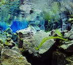 The water at Silfra fissure is some of the clearest water in the world with a visibility of approximately 120-metres.