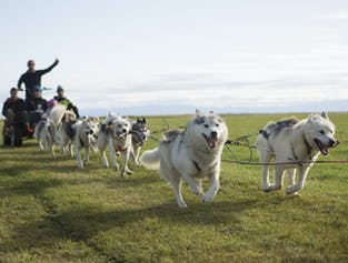 Husky Dog Cart Tour   Meet on Location
