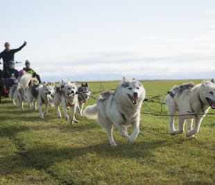 Husky Dog Cart Tour | Meet on Location