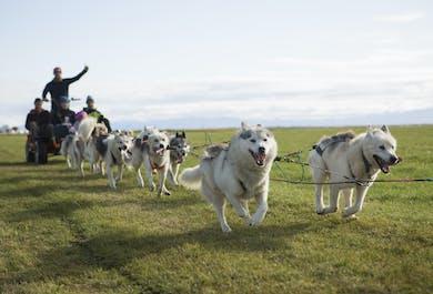 Husky Dog Cart Tour | Meet on Location