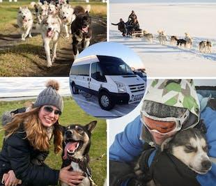 Катание на собачьих упряжках   Тур с трансфером из Рейкьявика