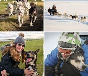 現地集合|犬ぞりツアー(初心者向け)|レイキャビク近郊