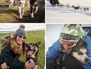 Sled Dog Ride Tour near Reykjavik  Meet on Location