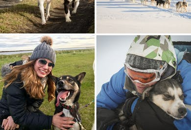 Sled Dog Ride Tour near Reykjavik| Meet on Location