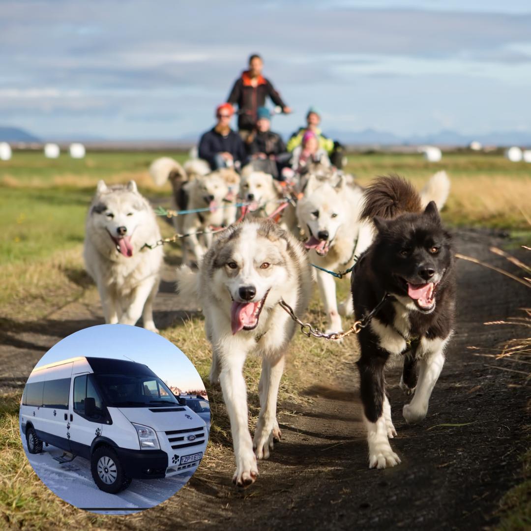 在冰岛体验一次一小时的极地下的平原雪橇犬拉车活动