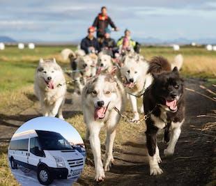 1-часовое катание на собачьей упряжке   Трансфер из Рейкьявика
