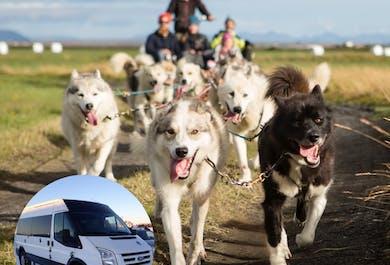 1-часовое катание на собачьей упряжке | Трансфер из Рейкьявика
