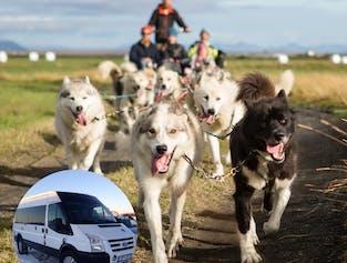 1-Hour Dog Cart Ride   Pick up from Reykjavik