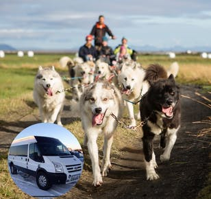 1-Hour Dog Cart Ride | Pick up from Reykjavik