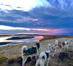 See Iceland's beautiful landscapes on a dog sled ride.