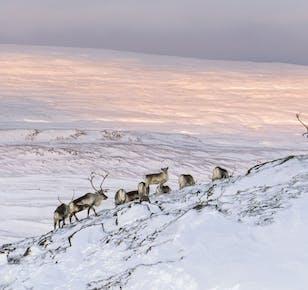 ดูกวางที่ฟยอร์ดทางตะวันออกประเทศไอซ์แลนด์   ทัวร์วันเดียว