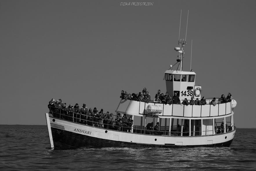 En hvalsafaritur