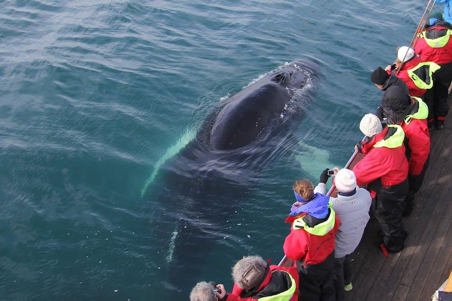 クジラとの奇跡の出会いが楽しめるホエールウオッチングツアー