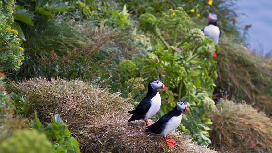 多くの野鳥が住むラゥトラビャルグ