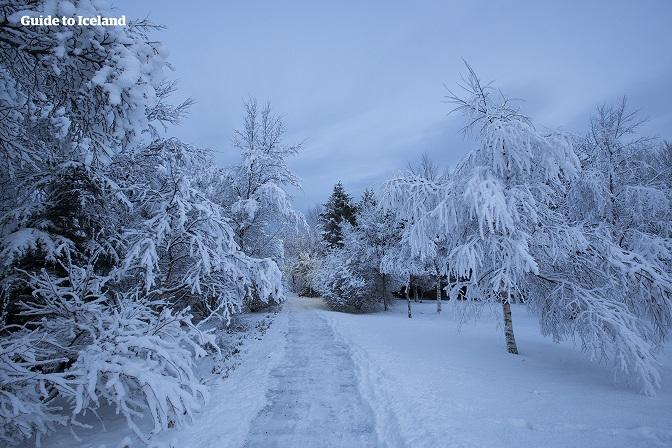 The city of Reykjavík in the winter