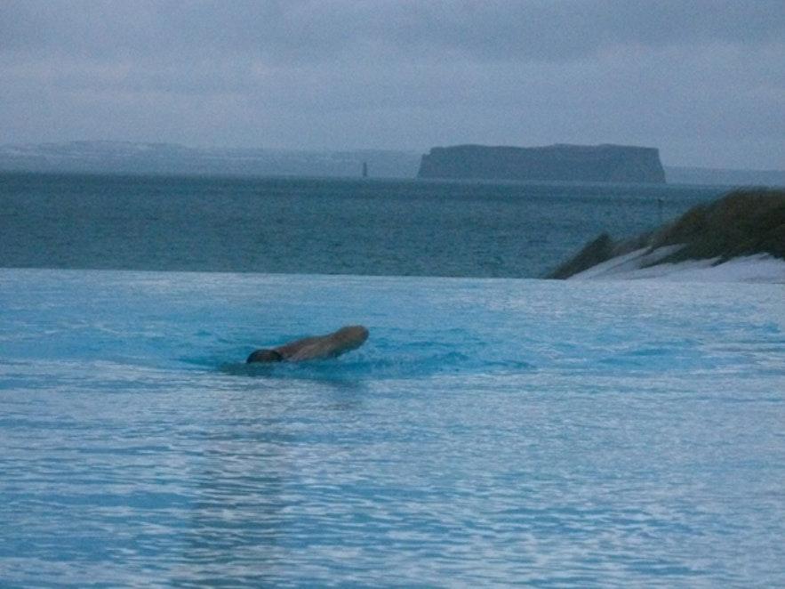 冰岛Hofsos游泳池