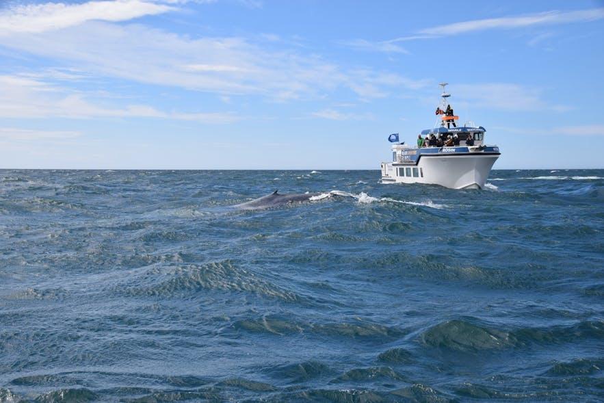 ボートのすぐ近くに鯨が出現