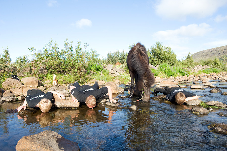 Have some fun with Iceland's horses - although sharing their drinking water may not be the best idea.