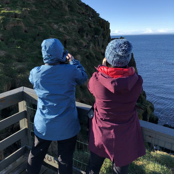 Puffins of Borgarfjordur Eystri – Guided Visit to Hafnarholmi