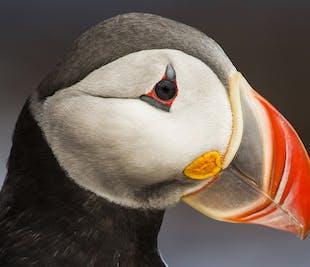 Geology tour: Asbyrgi & Melrakkasletta