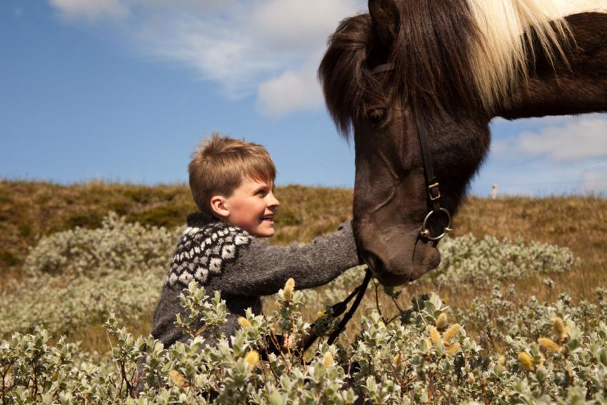 Beginners Horse Riding Tour