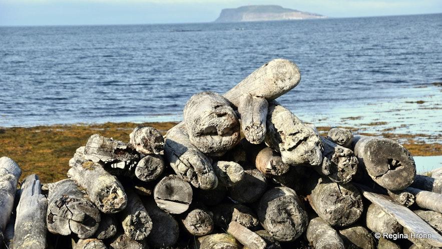 Driftwood at Strandir Iceland