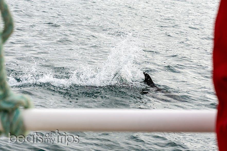 El chapuzón de este delfín de pico blanco casi nos salpica!