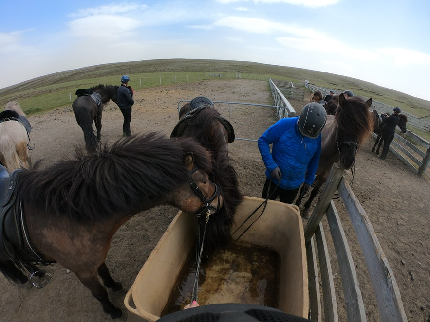 Kurze Pause für Pferd und Reiter auf Island.