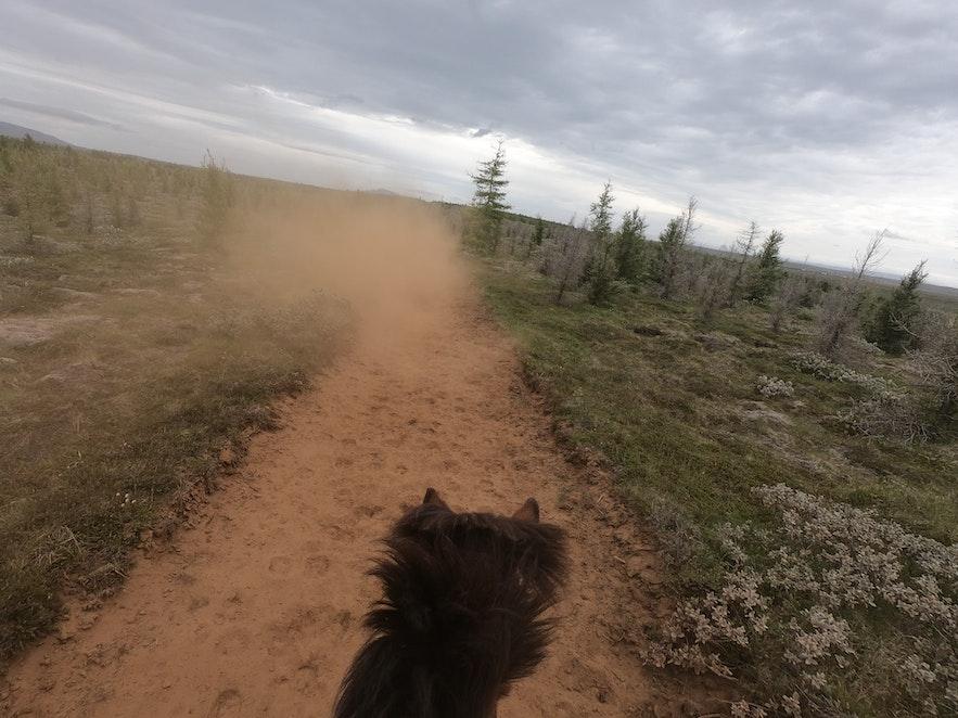 Schlechte Sicht vom Rücken des Islandpferdes.