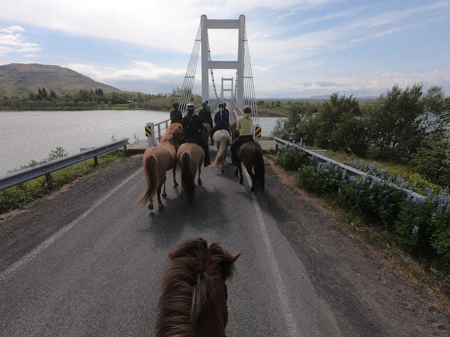 Überquerung der Brücke mit einer Gruppe von Reitern auf Islandpferden.