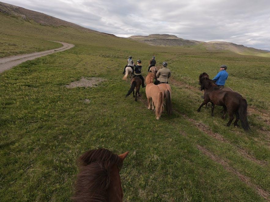 Reiter auf Islandpferden in isländischer Natur.