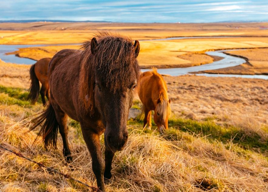 冰島西峽灣自由行懶人包