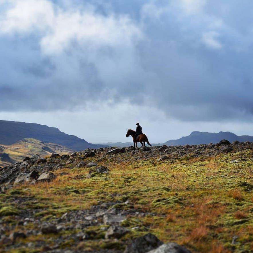 Reiter und Pferd auf der Suche nach Schafen in der isländischen Natur.
