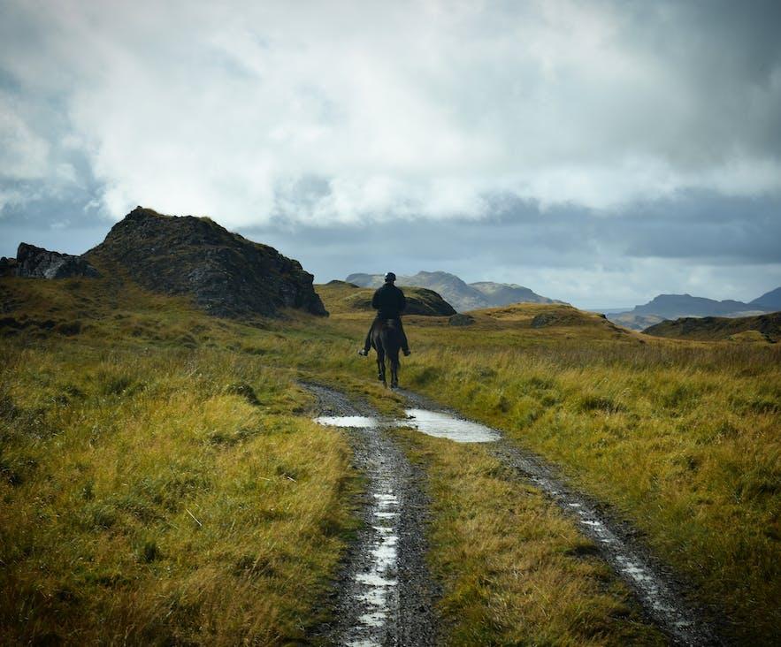 Atemberaubende Natur, mit Islandpferden und Schafen.