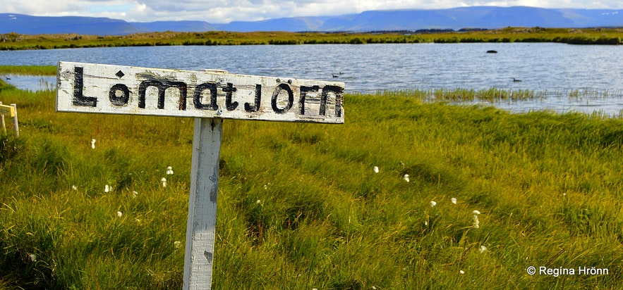 Lómatjörn pond at Reykholt