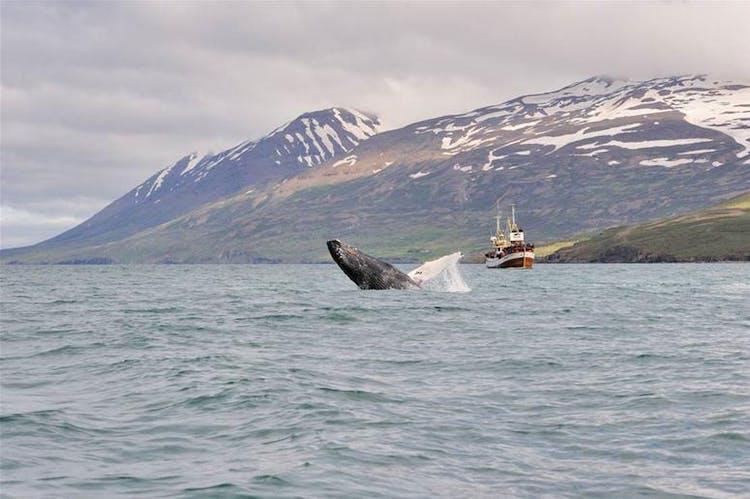 레이캬비크에는 다양한 문화적인 명소들이 있어 아이슬란드에서의 마지막 날을 보내기 최적입니다