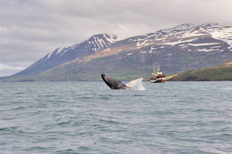 Reykjavik har gott om kulturella sevärdheter för din sista dag på Island.