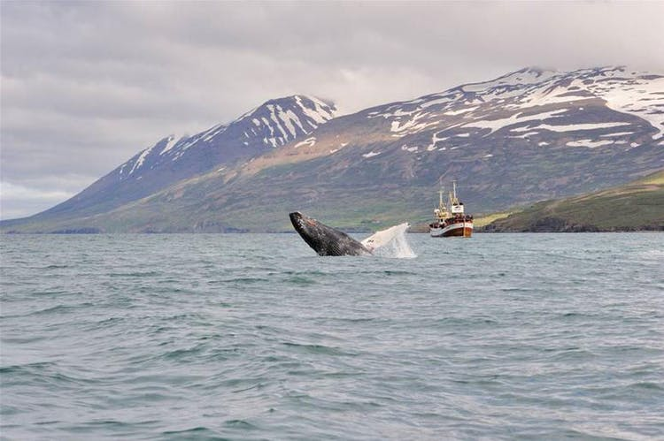 В Рейкьявике много развлечений и достопримечательностей, которыми можно занять ваш последний день в Исландии.