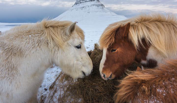 10 dagars vintertur på djupet med egen bil | Snæfellsnes, norrsken och sydkusten