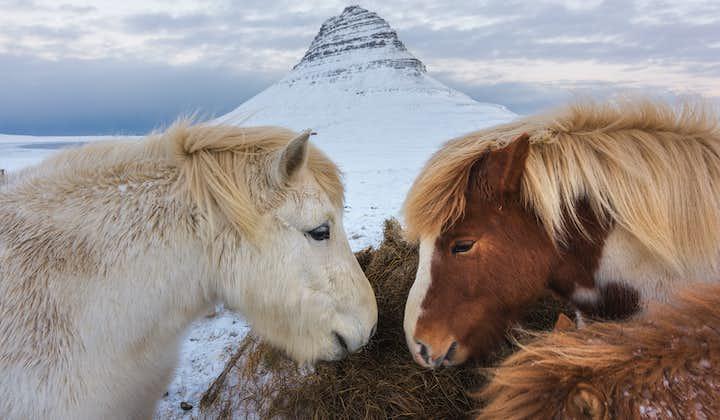 10 dagers vinterlig leiebiltur som inkluderer det meste   Snæfellsnes, nordlysjakt og Sørkysten