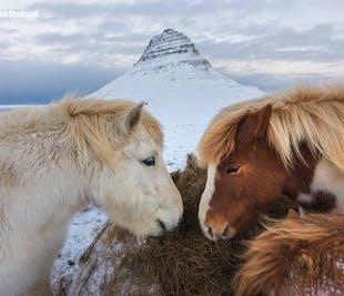 冬季セルフドライブツアー10日間|アイスランド西南部をじっくり楽しむ車の旅