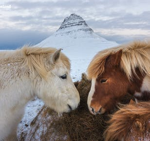 10일간의 겨울 렌트카 여행 패키지   스나이펠스네스, 서부 아이슬란드 및 남부 해안