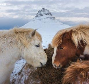 Viaje a fondo de 10 días en invierno a tu aire | Snæfellsnes, Auroras Boreales y la Costa Sur