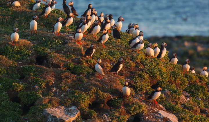 5-дневный автомобильный тур   Вестманновы острова, наблюдение за тупиками и китовое сафари