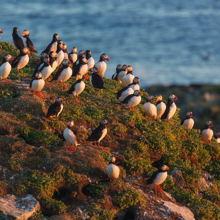 Viaje de 5 días a tu aire | Islas Vestman, tour de frailecillos y avistamiento de ballenas
