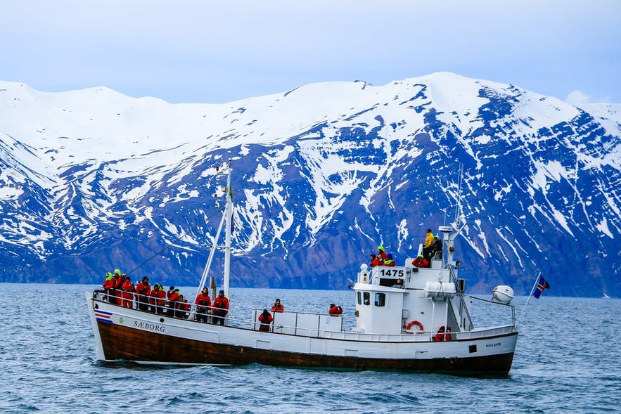 Whale watch cruise Iceland