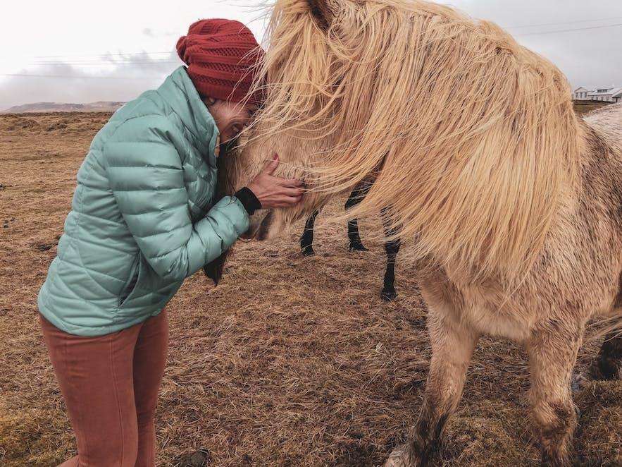 Icelandic horses - travel tips